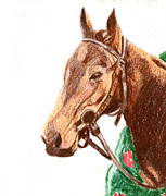 Thoroughbred Drawings - Thoroughbred  by Karen Clark