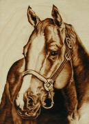 Horse Portrait Pyrography - Thoroughbred Portrait by Cate McCauley