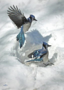 Framed Winter Snow Photograph Posters - Those Were The Jays Poster by Brian Pelkey