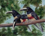 Toucan Paintings - Three Amigos by Brenda Thour