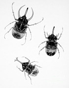 Beetles Posters - Three Beetles X-ray Poster by Ted Kinsman