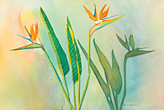 Bird Of Paradise Paintings - Three Birds by Sandra Neumann Wilderman