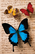 Yellow And Blue Posters - Three butterflies Poster by Garry Gay