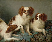 Cavalier Posters - Three Cavalier King Charles Spaniels on a Rug Poster by English School