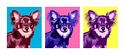 Chihuahua Colorful Art Prints - Three Chihuahuas Print by Laura Sotka