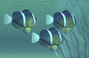 Yellowtail Clownfish Prints - Three Clownfish Swim Close To Some Print by Corey Ford