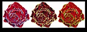 Nature Photos Mixed Media Posters - three colors of roses I Poster by Branko Jovanovic