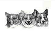 Corgi Drawings - Three Corgies by Deb Gardner