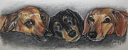 Brown Dogs Pastels - Three Cute Dogs by Angela Hannah