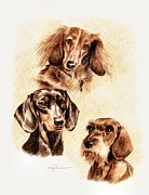 Dogs Drawings - Three Dachshunds by Barbara Walker