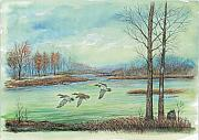Ducks Paintings - Three Ducks On A Blue Day by Samuel Showman