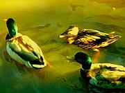 Duck Pond Prints - Three Ducks on Golden Pond Print by Amy Vangsgard