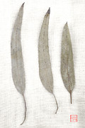 Leaf Collage Prints - Three Eucalyptus Leaves Print by Carol Leigh