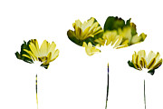 Silhouettes Mixed Media Metal Prints - Three Feeling Yellow Metal Print by Angelina Vick