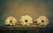 Green Color Art - Three Flowers by Kristin Kreet