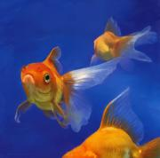Wildlife Digital Art Framed Prints - Three Goldfish Framed Print by Simon Sturge