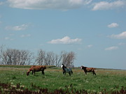 Youthful Photo Originals - Three Horse Ranch by Brian  Maloney
