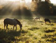 Three Horse Sunrise Print by Ron  McGinnis