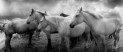 Darkroom Prints - Three Horses Facing East 2 Print by Christine Hauber