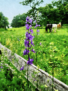 Wild Flower Art - Three Horses in Distance by Susan Savad