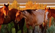 Cowboy Digital Art Prints - Three Horses of a Suspicious Corral Print by Gus McCrea