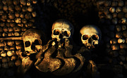 Bone Pile Prints - Three Human Skulls Print by Milan Baloun