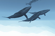 Isolated Digital Art - Three Humpback Whales Swim Together by Corey Ford