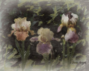 Iris Digital Art Prints - Three Iris Print by Arline Wagner