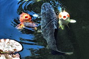 Fish Digital Art - Three is crowd by Don Mann