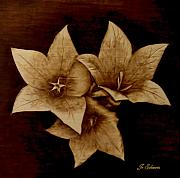 Flowers Pyrography Prints - Three Print by Jo Schwartz