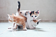 Shadow Metal Prints - Three Kittens Metal Print by Photos by Andy Le