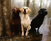 Retriever Painting Posters - Three Labs Poster by Robert Smith