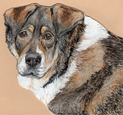 Dog Portraits Pastels Framed Prints - Three Legged Sweetie Boy Framed Print by Marla Saville