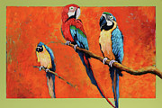 Rain Forest Macaws Prints - Three Macaws over abstract  Print by Charles Munn