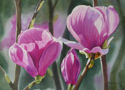 Colored Flowers Painting Posters - Three Magenta Magnolias Poster by Sharon Freeman