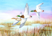 Ducks Paintings - Three Mallards by Pauline Ross