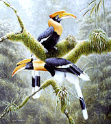 Hornbill Painting Framed Prints - Three Framed Print by Michael Oberhofer