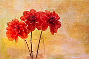 Dahlias Posters - Three Orange Dahlias Poster by Rebecca Cozart