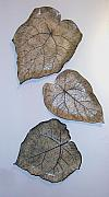Organic Ceramics Originals - Three Piece Leaf Arrangement by Janet Wyndham-Quin