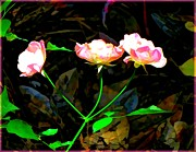 Mindy Newman Framed Prints - Three Pink Roses Framed Print by Mindy Newman