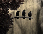 Corvidae Prints - Three Ravens Print by Gothicolors And Crows