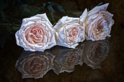 Arrangement Posters - Three Roses Still Life Poster by Tom Mc Nemar