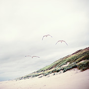 Sand Dune Framed Prints - Three Seagulls At Beach Framed Print by Elisabeth Schmitt