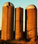 Old Barns Acrylic Prints - Three Silos at Daybreak Acrylic Print by Robert Habermehl