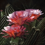 Blooming Paintings - Three Sisters by Mary Rogers