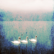 Wintry Metal Prints - Three Swans Metal Print by Joana Kruse
