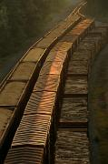 World Cultures Metal Prints - Three Trains Run On Parallel Tracks Metal Print by Medford Taylor