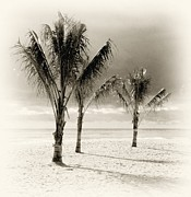Jersey Shore Digital Art Posters - Three Trees - Jersey Shore Poster by Angie McKenzie