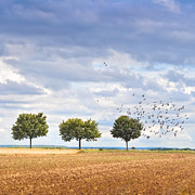 Flock Of Bird Art - Three Trees In Soil Field by Michael Kohaupt