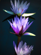 Flora Metal Prints - Three Water Lilies Metal Print by Julie Palencia